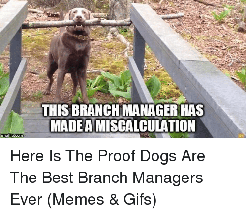 Dogs, Memes, and Best: THIS BRANCHMANAGER HAS  MADEAMISCALCULATION  imgtip.com Here Is The Proof Dogs Are The Best Branch Managers Ever (Memes & Gifs)