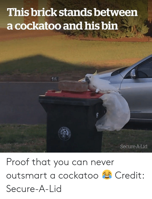 Never, Proof, and Brick: This brick stands between  a cockatoo and his bin  16  Secure-A-Lid Proof that you can never outsmart a cockatoo 😂  Credit: Secure-A-Lid