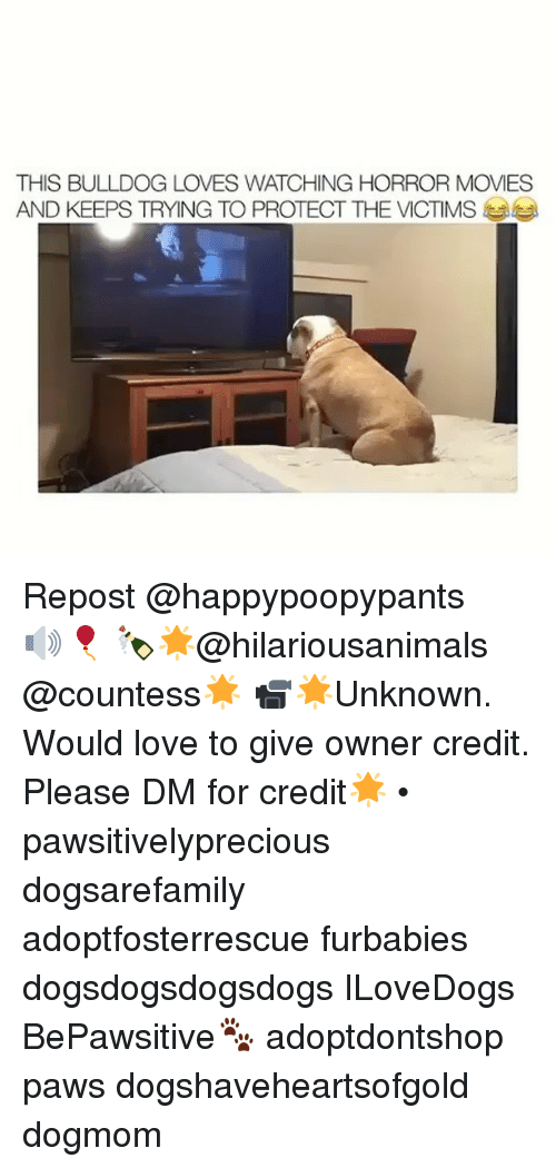 Love, Memes, and Movies: THIS BULLDOG LOVES WATCHING HORROR MOVIES  AND KEEPS TRYING TO PROTECT THE VICTIMS Repost @happypoopypants ・・・ 🔊🎈 🍾🌟@hilariousanimals @countess🌟 📹🌟Unknown. Would love to give owner credit. Please DM for credit🌟 • pawsitivelyprecious dogsarefamily adoptfosterrescue furbabies dogsdogsdogsdogs ILoveDogs BePawsitive🐾 adoptdontshop paws dogshaveheartsofgold dogmom