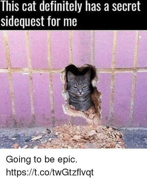Definitely, Video Games, and Epic: This cat definitely has asecret  sidequest for me Going to be epic. https://t.co/twGtzflvqt