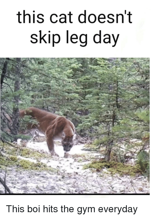This Cat Doesn't Skip Leg Day | Gym Meme on ME ME