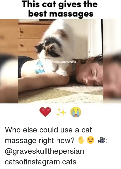 Cats, Massage, and Memes: This cat gives the  best massages Who else could use a cat massage right now? ✋😌 🎥: @graveskullthepersian catsofinstagram cats