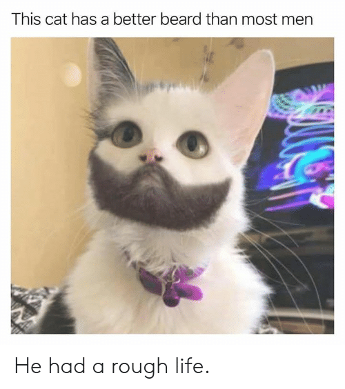 Beard, Dank, and Life: This cat has a better beard than most mern He had a rough life.