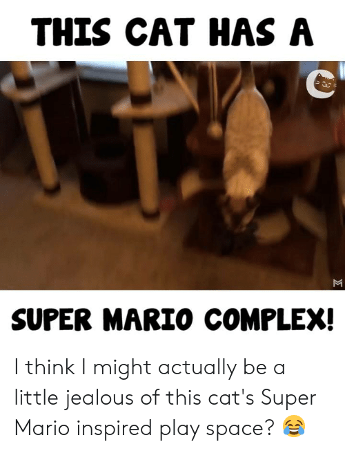Cats, Complex, and Jealous: THIS CAT HAS A  SUPER MARIO COMPLEX! I think I might actually be a little jealous of this cat's Super Mario inspired play space? 😂