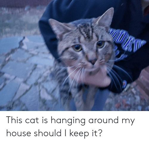 My House And Cat This Is Hanging Around Should