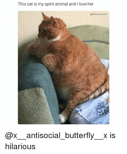 Funny, Love, and Ted: This cat is my spirit animal and l love her  @hilarious ted @x__antisocial_butterfly__x is hilarious