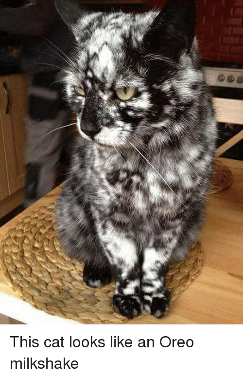 Grey And Black Cat With Spots