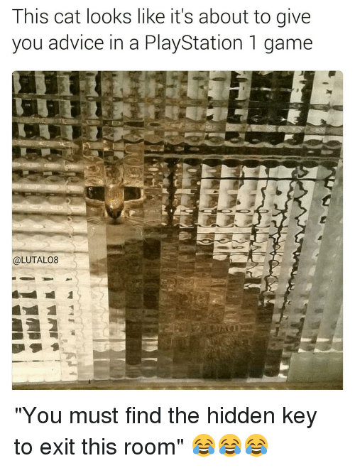 """Advice, Memes, and PlayStation: This cat looks like it's about to give  you advice in a PlayStation 1 game  @LUTAL08 """"You must find the hidden key to exit this room"""" 😂😂😂"""