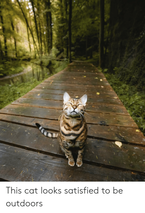 Cat, This, and Outdoors: This cat looks satisfied to be outdoors