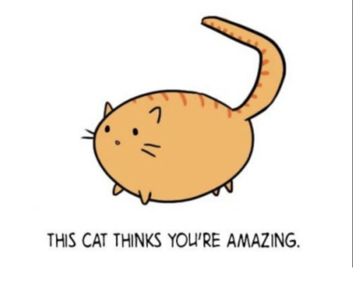 Motivational Cat Gif