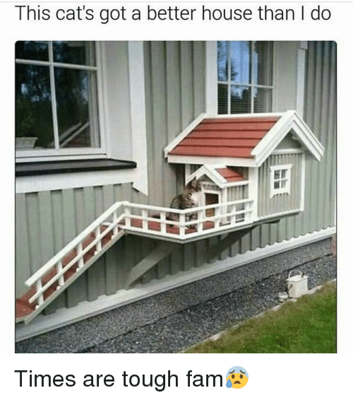 Fam, Funny, and Tough: This cat's got a better house than l do Times are tough fam😰