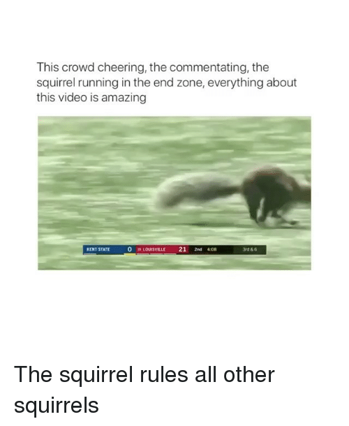 Squirrel, Video, and Amazing: This crowd cheering, the commentating, the  squirrel running in the end zone, everything about  this video is amazing  KENT STATE  0  19 LOUISVILLE 21 2nd 408  3rd & 6 The squirrel rules all other squirrels