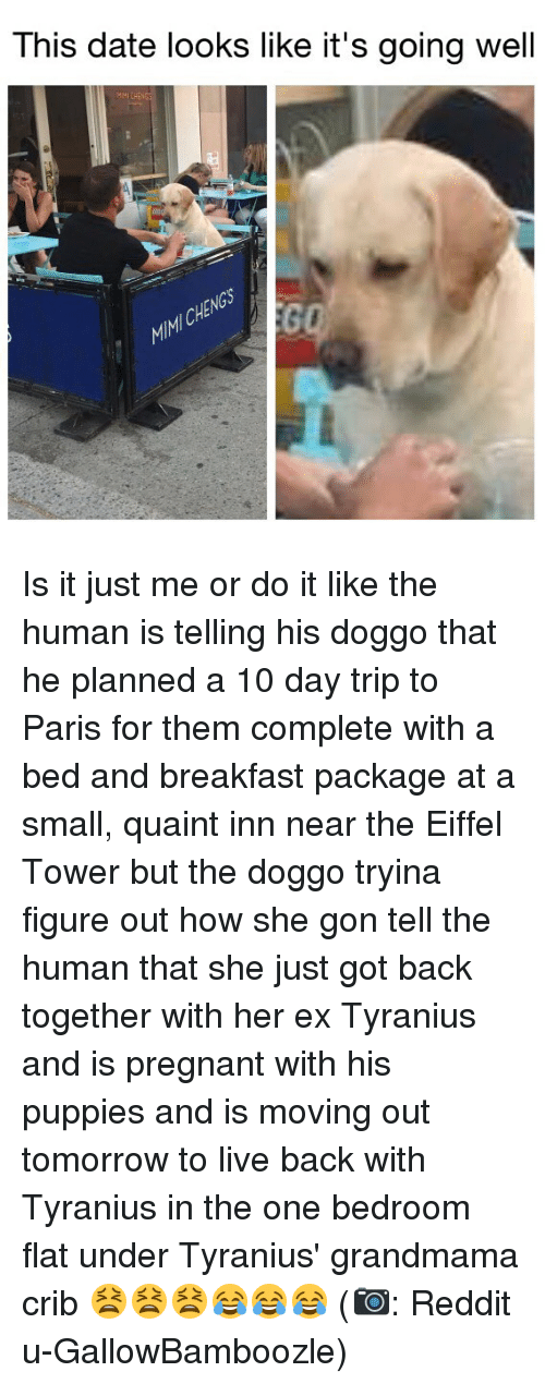 Memes, Pregnant, and Puppies: This date looks like it's going well  MMICHENG Is it just me or do it like the human is telling his doggo that he planned a 10 day trip to Paris for them complete with a bed and breakfast package at a small, quaint inn near the Eiffel Tower but the doggo tryina figure out how she gon tell the human that she just got back together with her ex Tyranius and is pregnant with his puppies and is moving out tomorrow to live back with Tyranius in the one bedroom flat under Tyranius' grandmama crib 😫😫😫😂😂😂 (📷: Reddit u-GallowBamboozle)