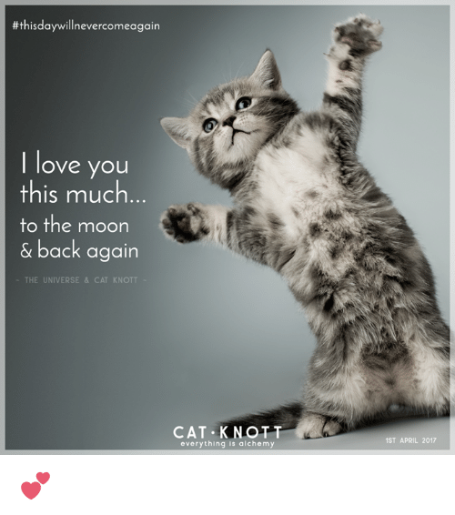 I Love You This Much Kitty   www.pixshark.com - Images ...