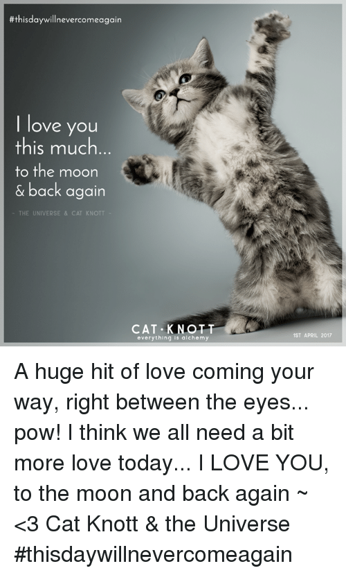 i love you this much cat - photo #7