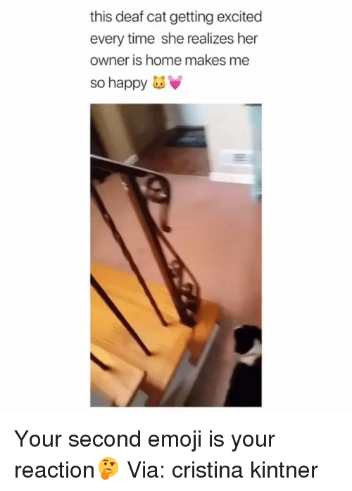 Emoji, Memes, and Happy: this deaf cat getting excited  every time she realizes her  owner is home makes me  so happy Your second emoji is your reaction🤔 Via: cristina kintner