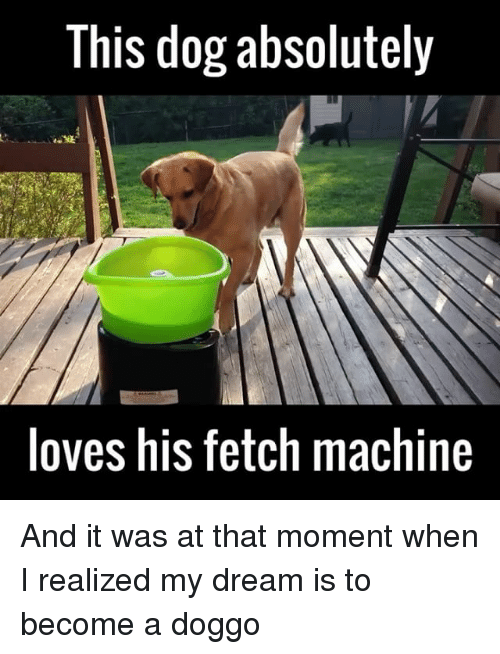 this dog absolutely loves his fetch machine and it was at that