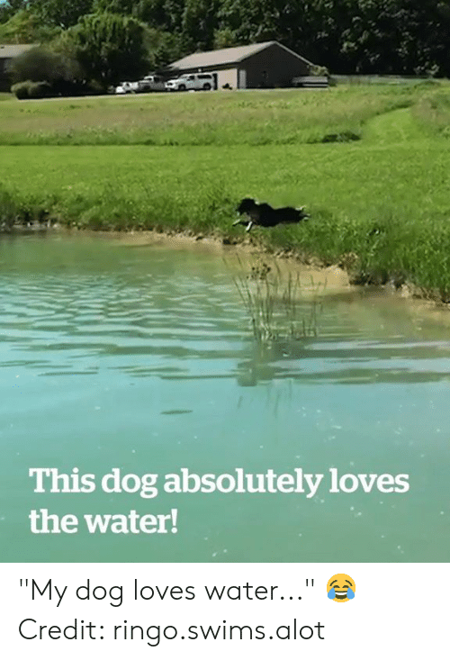 "Water, Dog, and Ringo: This dog absolutely loves  the water! ""My dog loves water..."" 😂  Credit: ringo.swims.alot"
