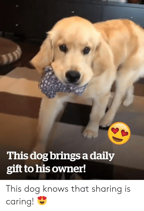 Dog, This, and Daily: This dog brings a daily  gift to his owner! This dog knows that sharing is caring! 😍