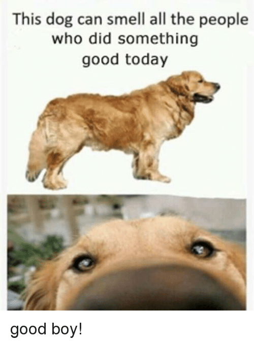 Smell, Good, and Today: This dog can smell all the people  who did something  good today good boy!