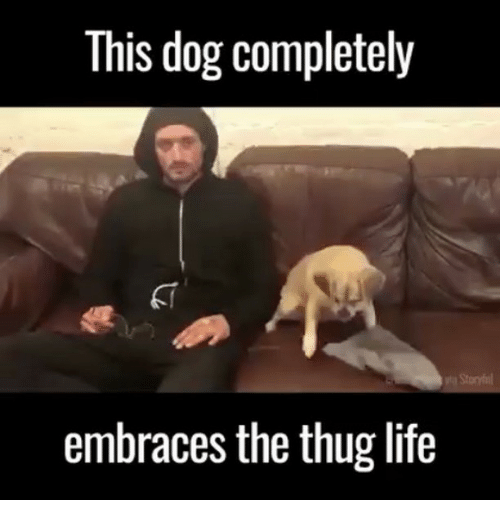 Life, Memes, and Thug: This dog completely  embraces the thug life