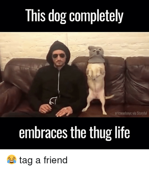 Life, Memes, and Thug: This dog completely  ericsearlenyc via Storyful  embraces the thug life 😂 tag a friend