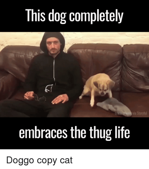 Funny, Life, and Thug: This dog completely  via Storyful  embraces the thug life Doggo copy cat