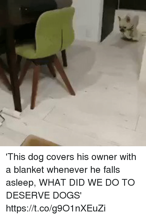 Dogs, Covers, and Relatable: 'This dog covers his owner with a blanket whenever he falls asleep, WHAT DID WE DO TO DESERVE DOGS' https://t.co/g9O1nXEuZi