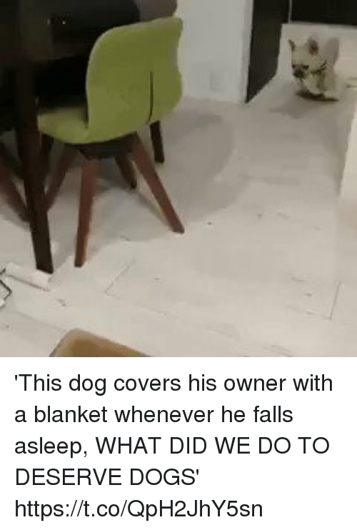 Dogs, Covers, and Girl Memes: 'This dog covers his owner with a blanket whenever he falls asleep, WHAT DID WE DO TO DESERVE DOGS' https://t.co/QpH2JhY5sn