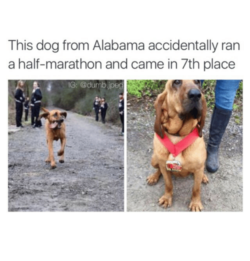 Dumb, Alabama, and Dog: This dog from Alabama accidentally ran  a half-marathon and came in 7th place  IG: @dumb.jpeg  2