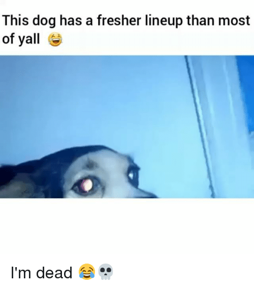 Dogs, Funny, and Dog: This dog has a fresher lineup than most  of yall I'm dead 😂💀