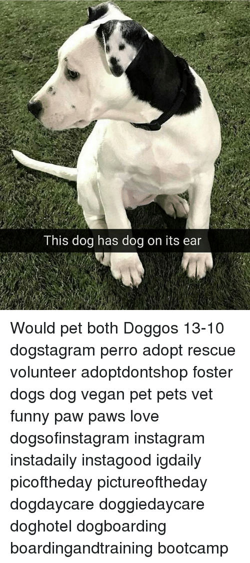 Dogs, Funny, and Instagram: This dog has dog on its ear Would pet both Doggos 13-10 dogstagram perro adopt rescue volunteer adoptdontshop foster dogs dog vegan pet pets vet funny paw paws love dogsofinstagram instagram instadaily instagood igdaily picoftheday pictureoftheday dogdaycare doggiedaycare doghotel dogboarding boardingandtraining bootcamp