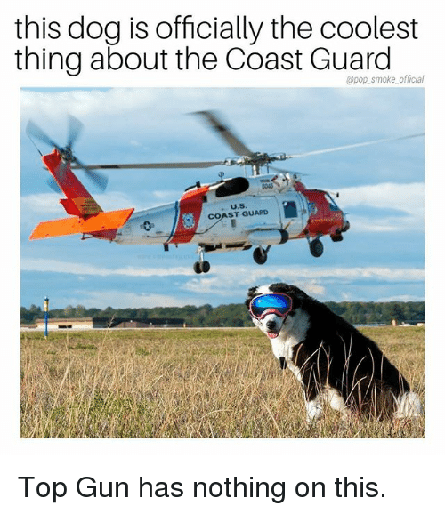 Memes, Pop, and Coast Guard: this dog is officially the coolest  thing about the Coast Guard  @pop_smoke official  COAST GUARD Top Gun has nothing on this.