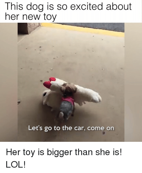 Memes, 🤖, and Dog: This dog is so excited about  her new toy  Let's go to the car, come on Her toy is bigger than she is! LOL!