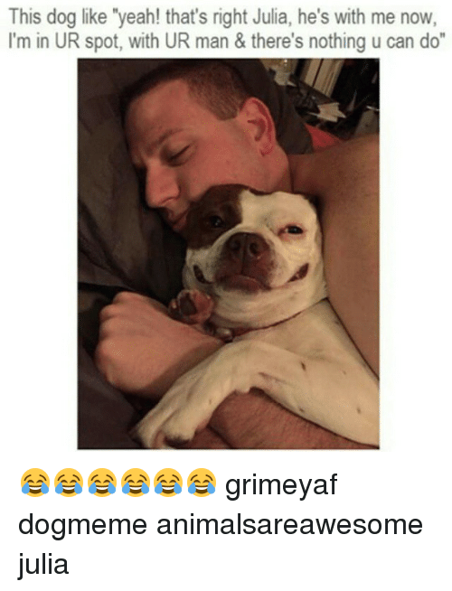 """Dogs, Yeah, and Dank Memes: This dog like """"yeah! that's right Julia, he's with me now,  I'm in UR spot, with UR man & there's nothing u can do 😂😂😂😂😂😂 grimeyaf dogmeme animalsareawesome julia"""