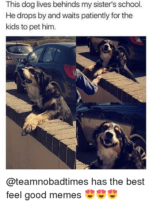 Dogs, Memes, and School: This dog lives behinds my sister's school.  He drops by and waits patiently for the  kids to pet him. @teamnobadtimes has the best feel good memes 😍😍😍