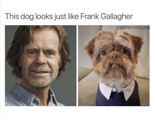 frank gallagher dog