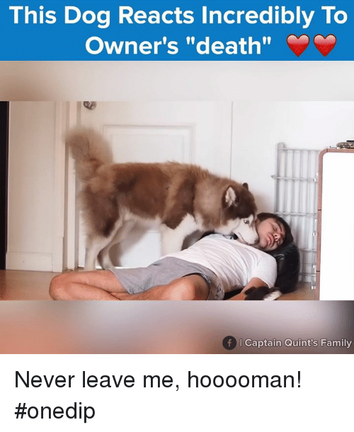 """Memes, 🤖, and Incredibles: This Dog Reacts Incredibly To  Owner's """"death""""  f Captain Quint's Family Never leave me, hooooman! #onedip"""