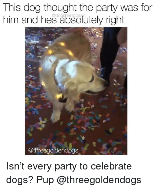 Dogs, Memes, and Party: This dog thought the party was for  him and hes absolutely right  @dogsbeingbasc  @threegoldendogs Isn't every party to celebrate dogs? Pup @threegoldendogs