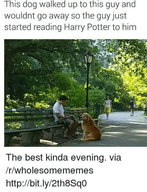 Harry Potter, Best, and Http: This dog walked up to this guy and  wouldnt go away so the guy just  started reading Harry Potter to him The best kinda evening. via /r/wholesomememes http://bit.ly/2th8Sq0