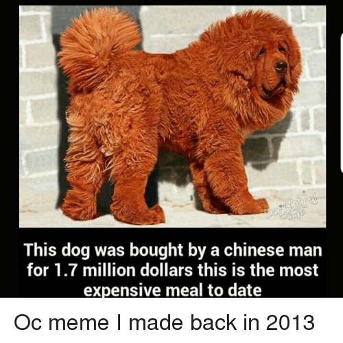 Meme, Chinese, and Date: This dog was bought by a chinese man  for 1.7 million dollars this is the most  expensive meal to date