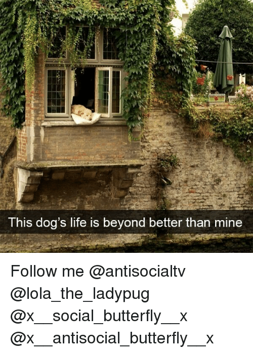 Dogs, Life, and Memes: This dog's life is beyond better than mine Follow me @antisocialtv @lola_the_ladypug @x__social_butterfly__x @x__antisocial_butterfly__x