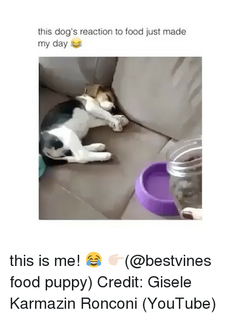 Dogs, Food, and Memes: this dog's reaction to food just made  my day this is me! 😂 👉🏻(@bestvines food puppy) Credit: Gisele Karmazin Ronconi (YouTube)