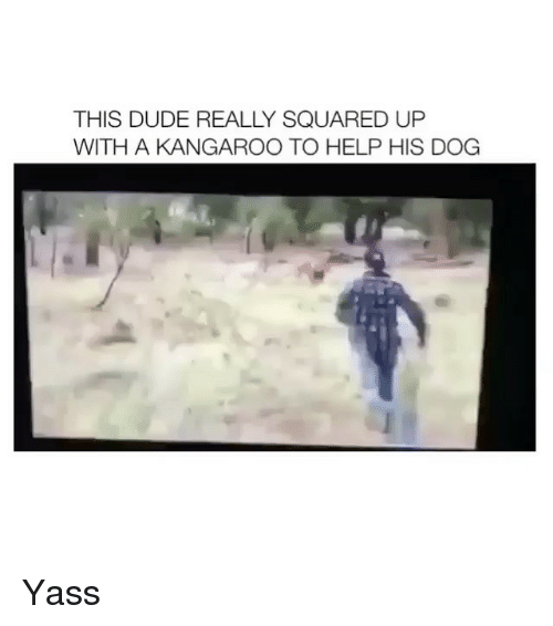 Dogs, Square Up, and Girl: THIS DUDE REALLY SQUARED UP  WITH A KANGAROO TO HELP HIS DOG Yass