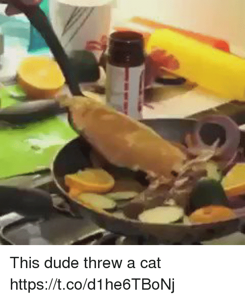 Dude, Girl Memes, and Cat: This dude threw a cat https://t.co/d1he6TBoNj