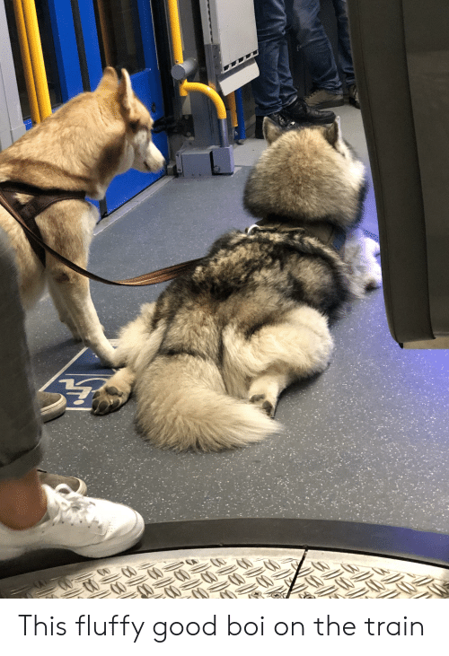 Good, Train, and Boi: This fluffy good boi on the train