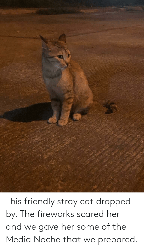 Fireworks, Media, and Her: This friendly stray cat dropped by. The fireworks scared her and we gave her some of the Media Noche that we prepared.