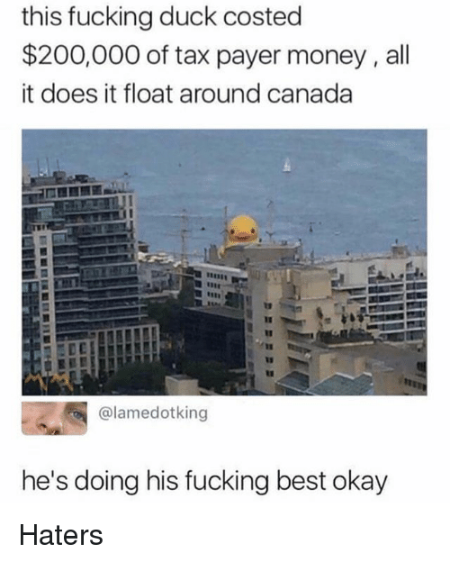 Bailey Jay, Fucking, and Memes: this fucking duck costed  $200,000 of tax payer money, all  it does it float around canada  @lamedotking  he's doing his fucking best okay Haters