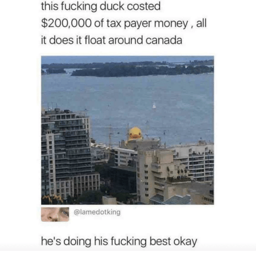 Bailey Jay, Fucking, and Money: this fucking duck costed  $200,000 of tax payer money,all  it does it float around canada  @lamedotking  he's doing his fucking best okay