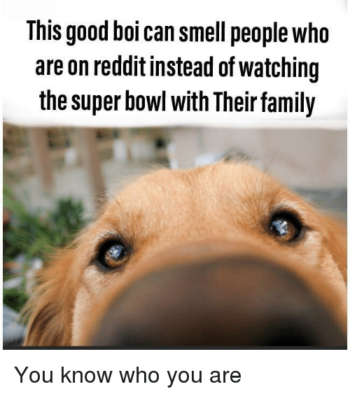 This Good Boi Can Smell People Who Are on Reddit Instead of
